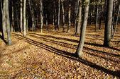 autumn forest in bright sunlight