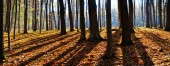 shade of trees in the forest panoramic
