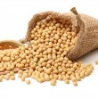 Gold soybeans isolated on white background...