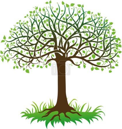 Illustration pour Arbre vert sur fond blanc - image libre de droit