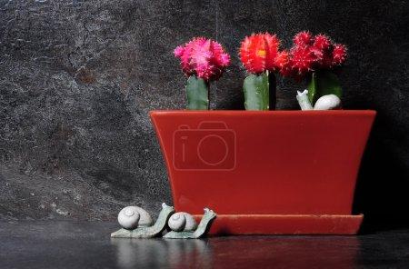 Photo pour Cactus de cultivars de Gymnastique grafted de Gymnastique dans les couleurs rouges, oranges et roses, dans le récipient rouge de brique avec des escargots en pierre contre un arrangement dramatique de banc de cuisine d'ardoise noire. - image libre de droit