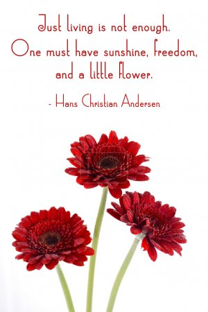 Red gerbera flowers with inspirational quote.
