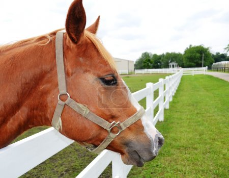 Horse head profile close up