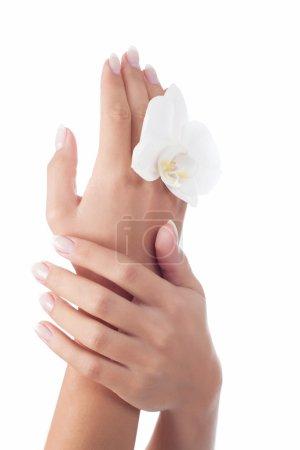 Beautiful woman's hands
