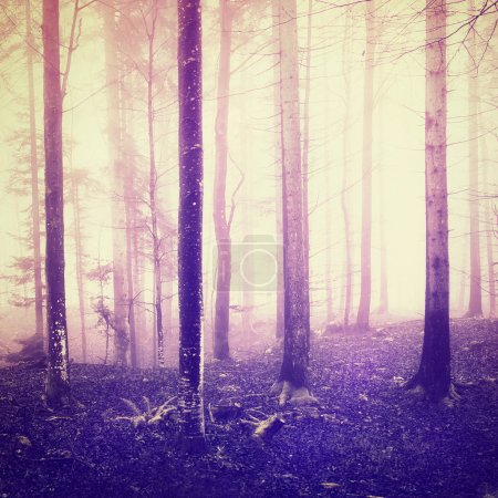 Fantasy light and purple color in forrest