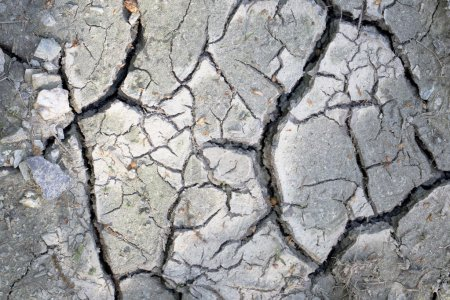 Details of a dried cracked desaturated soil