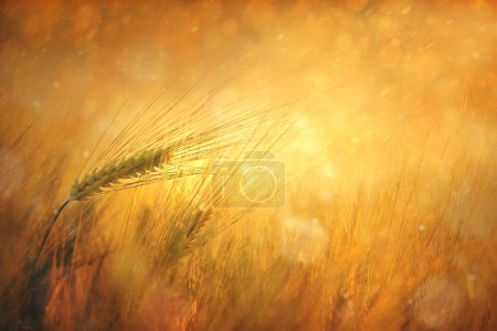Countryside sunny wheat field fantasy background