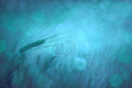 Countryside rainy wheat field fantasy background