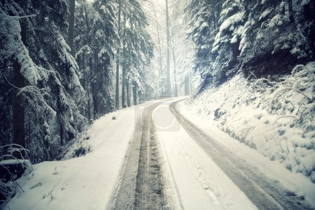 Snowy winter forest road