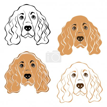 Cocker Spaniel dog face