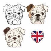 Vector set of  English bulldog's face