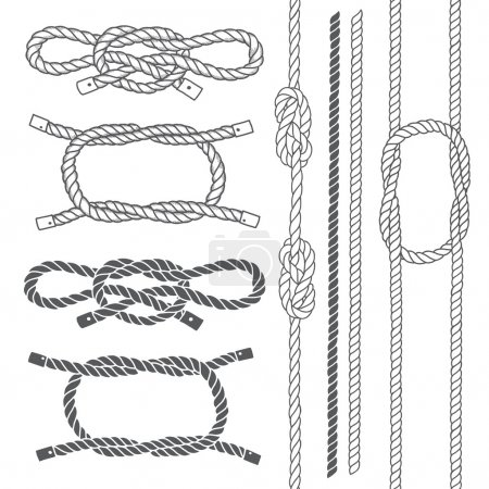 Illustration for Set of marine rope, knots. Vector elements on a white background - Royalty Free Image