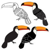 Toucan Set of  birds  isolated on white background Hand drawn