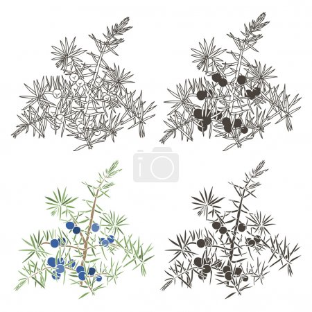 Seamless pattern with juniper. Abstract vector flo...
