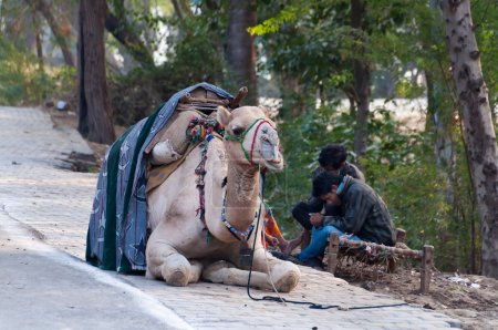 Cameleers with camel wait for tourists