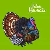 Isolated sketc farm turkey on a background