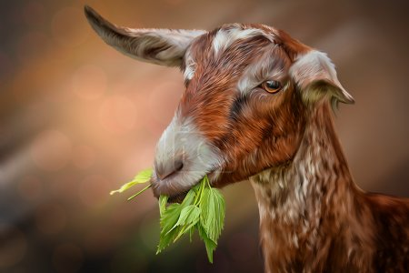 Drawing goats, portrait