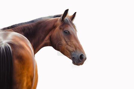 Dibujo de un caballo, retrato