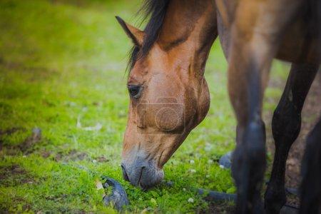 caballo, cuello de caballo, caballo en verano, traje de castaño de caballo