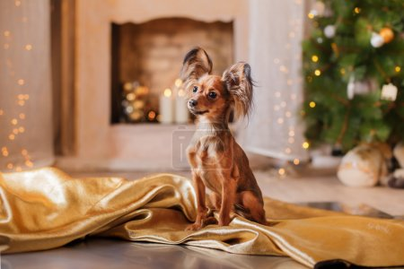 Russian Toy Terrier, Christmas and New Year