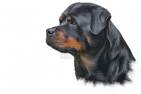 Drawing of the dog rottweiler, tricolor,portrait