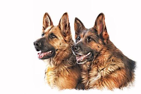 Photo pour Dessin portrait de chien, peinture à l'huile sur fond blanc - image libre de droit