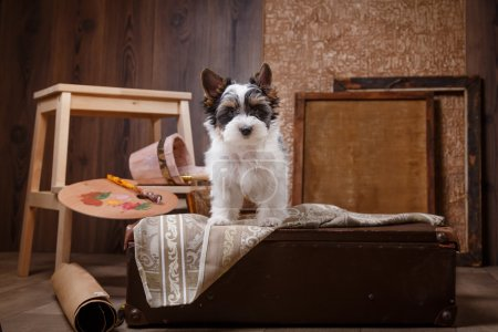 Photo pour Chiot de verticale de studio Biewer Yorkshire terrier, fond de couleur - image libre de droit