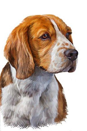 Photo pour Portrait de chien peinture à l'huile sur fond blanc - image libre de droit