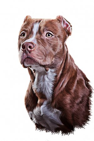 Drawing Dog American Pit Bull Terrier