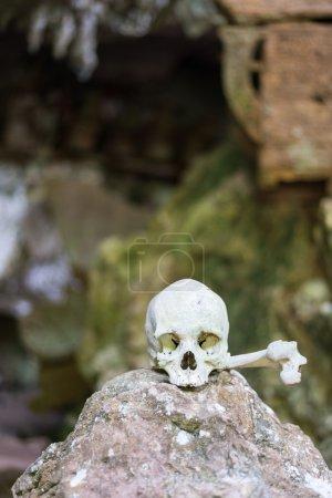 Photo pour Os et crânes humains à Tampangallo (Tana Toraja, Sulawesi du Sud, Indonésie), lieu de sépulture traditionnel avec des cercueils semi-ouverts placés dans des grottes ou suspendus à des falaises . - image libre de droit