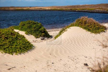 Dünen auf dem Fuerteventura Naturpfad GR 131 von Corralejo nach Morro Jable im Sommer 2020.