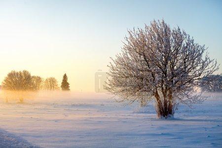 Photo pour Paysage d'hiver avec des arbres givrés sur fond de coucher de soleil - image libre de droit