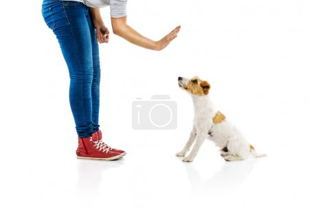 Photo pour Woman training dog isolated on white background - image libre de droit