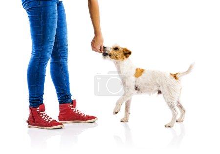 Woman feeding dog