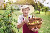 Starší žena v její zahradě