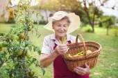 Senior donna nel suo giardino