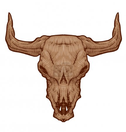 Drawing animals skull bull