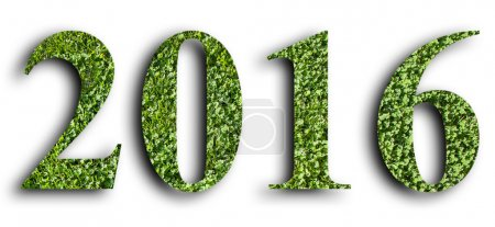 2016, New year made from the green grass, isolated on white can use as abstract background. New year 2016 - Abstract alphabet number of green grass isolated on white background with clipping path.