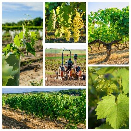 kolaż o przemyśle winnic i wina