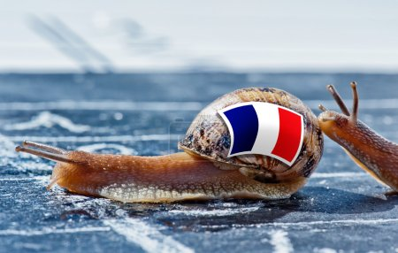 Snail with the colors of France flag encouraged by another country