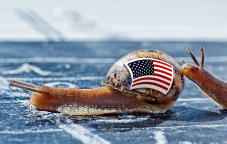 Snail with the colors of Usa flag encouraged by another country