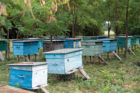 Apiary in the woods