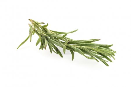 Photo for Green fresh Rosemary isolated on white background - Royalty Free Image