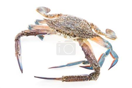 sea Raw crab