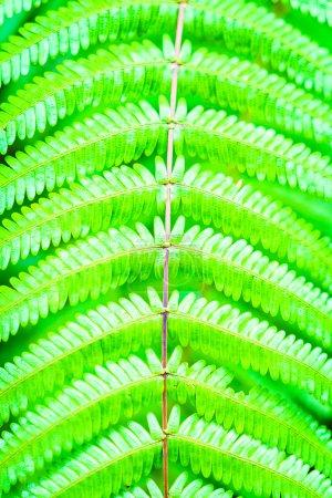 Green color of fern leaf