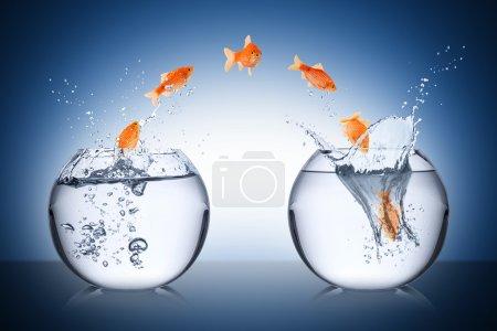 Photo pour Concept de changement de poisson - image libre de droit