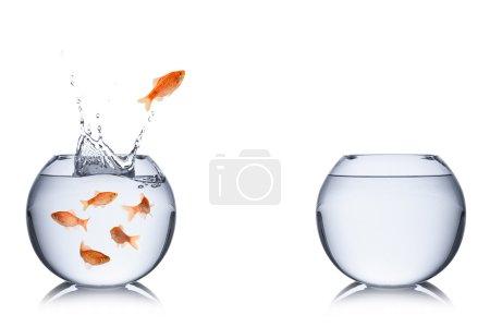 Photo pour Poissons sautant dans un bol vide - image libre de droit