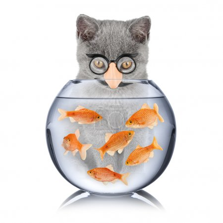 Photo for Cat with false nose looking into fish bowl - Royalty Free Image