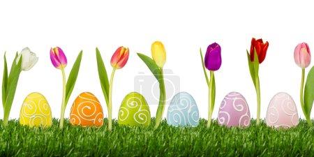 Photo pour Oeufs de Pâques avec des tulipes sur fond blanc - image libre de droit