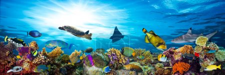 Photo for Colorful coral reef with many fishes and sea turtle - Royalty Free Image